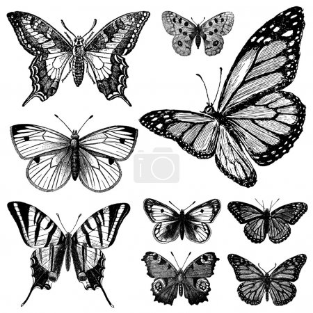 Vector Vintage Butterfly Set 2