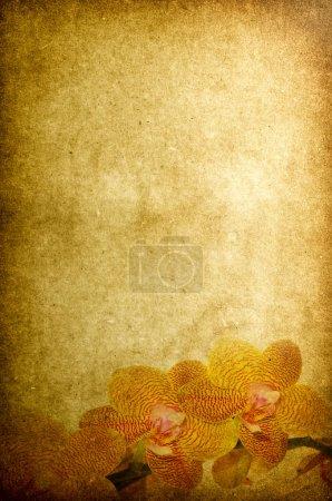 Photo pour Vintage Valentine - fleurs d'orchidée sur vieux papier sépia - image libre de droit