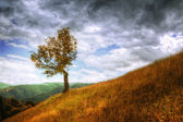 Mountain landscape - isolated tree and autumn grass
