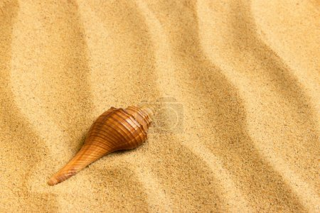 Sea shell lying on the pure golden sand. Macro. Copy space.