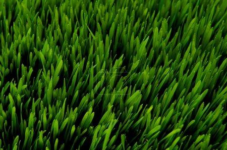 Green grass top view at night