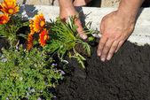 Výsadba květin