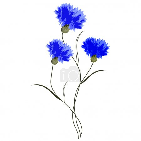 Illustration for Bouquet of cornflowers - Royalty Free Image