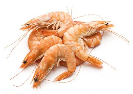 Photo pour Crevettes royales fraîches cuites isolées sur blanc - image libre de droit