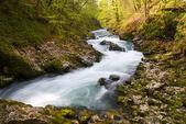 River vintgar