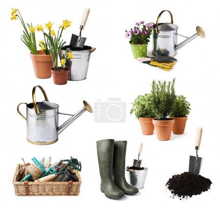 Photo pour Outils de jardinage et fleurs isolés sur blanc - image libre de droit