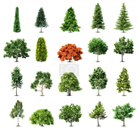 Set of trees isolated on white background. Vector ...