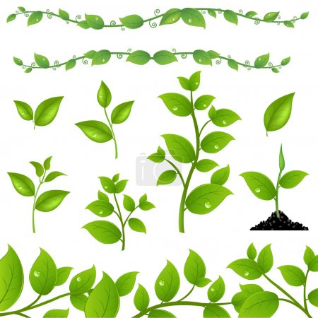 Illustration for Set Of Green Leaves And Sprouts, Isolated On White Background, Vector Illustration - Royalty Free Image