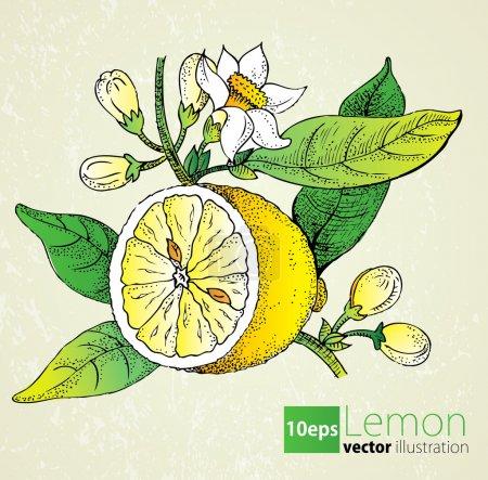 Photo for Lemon flowers & leaf set in retro style - Royalty Free Image