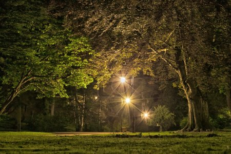 Photo for Park in the evening time - Royalty Free Image