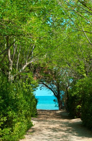 Pathway in green forest to the beach