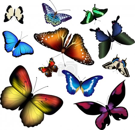 Illustration for Vector illustration of butterflies on white - Royalty Free Image