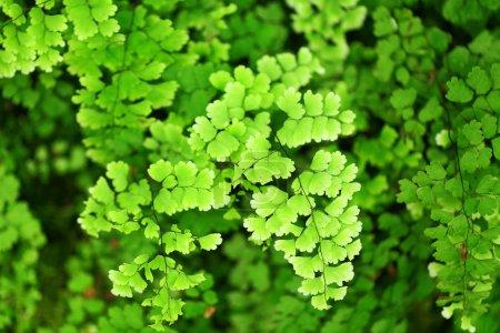 Fresh green leaf