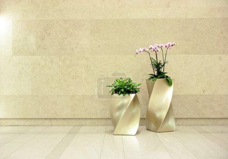 Photo pour Belle orchidée dans Hall - image libre de droit