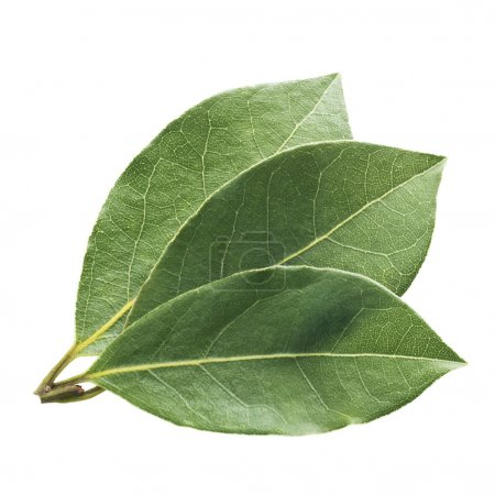 Photo for Fresh and green bay leaf on a white background - Royalty Free Image