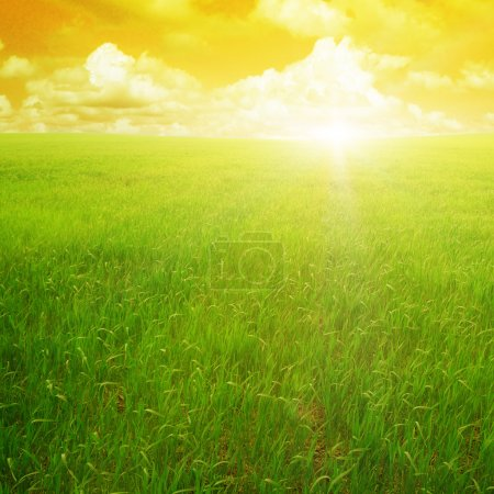 Photo pour Coucher de soleil sur un champ de printemps - image libre de droit
