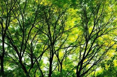 Photo pour La lumière du soleil à travers les arbres. fond de printemps. - image libre de droit