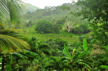 Jungle at Dominican Republic