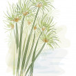 Papyrus plant. (Cyperus Papyrus) Watercolor style....