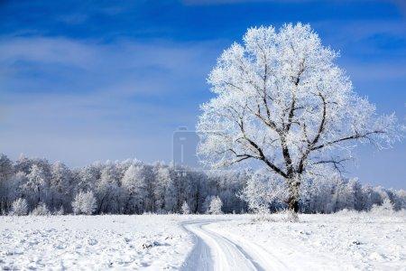 Photo pour Arbres recouverts de neige contre le ciel - image libre de droit
