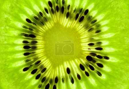 Photo for Fresh Kiwi background / SuperMacro / back lit - Royalty Free Image