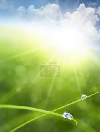 Eco background with Sky, Grass, Water Drops and Cloud reflection