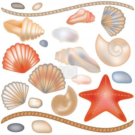 Set seashells and starfish isolated, vector illustration