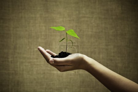 Photo for Female hand holding a new green life on burlap background.Focus on hand and plant - Royalty Free Image