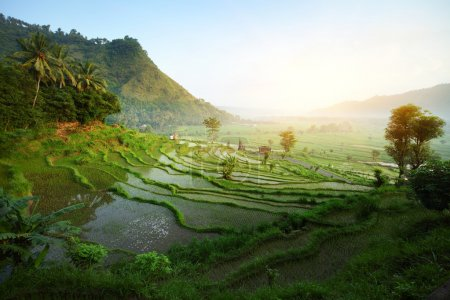 Photo for Rice tarrace in mountains. Bali. Indonesia - Royalty Free Image