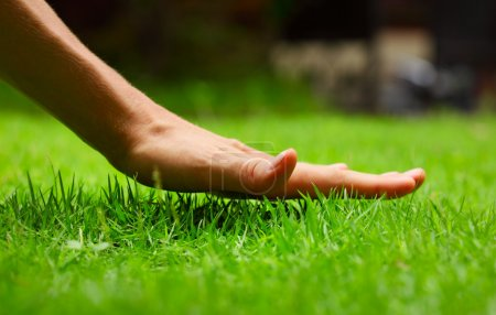 Photo for Hand above green fresh grass on a meadow. Shallow DOF - Royalty Free Image