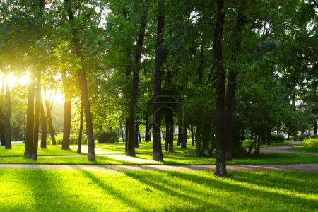 Photo pour Herbe verte sur une prairie ensoleillée d'un parc municipal avec de grands arbres autour - image libre de droit