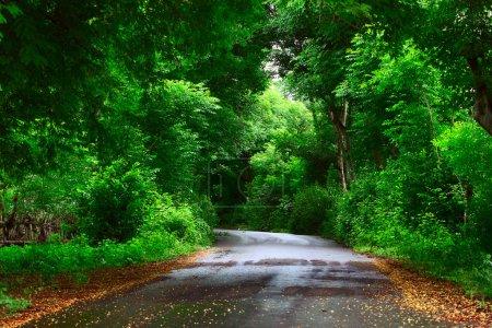 Photo pour Chemin d'asphalte dans parc de verdure luxuriant - image libre de droit