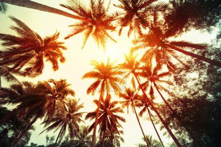 Photo pour Groupe de palmiers avec ciel ensoleillé sur le fond - image libre de droit