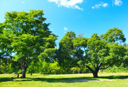 Photo for Two big trees on green lawn - Royalty Free Image