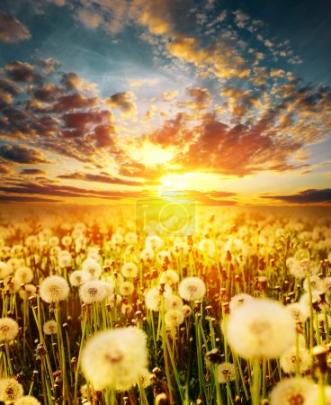 Photo for Dramatic sunset clouds over meadow with dandelions - Royalty Free Image