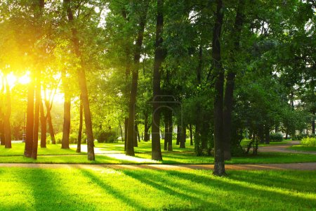 Photo for Sunset in park with trees and green grass - Royalty Free Image