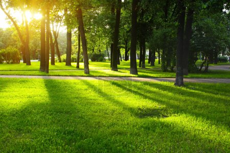 Photo for Green lawn in city park under sunny light - Royalty Free Image
