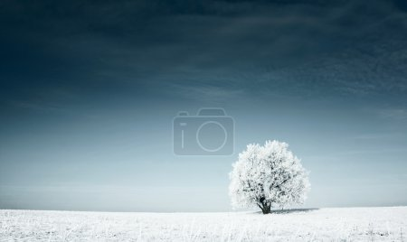 Photo for Alone frozen tree in snowy field and dark blue sky - Royalty Free Image