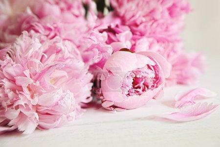Photo pour Belles fleurs de pivoine rose sur la surface du bois - image libre de droit