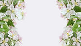 Apple blossom borders on pink background