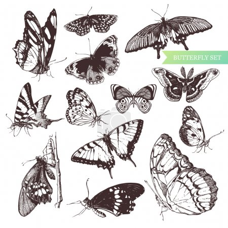 Illustration for Butterfly set: entomological collection of highly detailed hand drawn butterflies. - Royalty Free Image