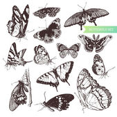 Butterfly set: entomological collection of highly detailed hand drawn butterflies