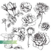 Flower set: highly detailed hand drawn roses