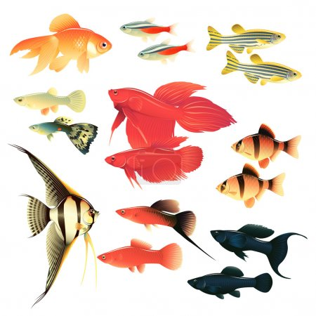 Illustration pour Poissons d'aquarium : grande collection d'illustrations très détaillées avec des poissons d'aquarium tropicaux . - image libre de droit