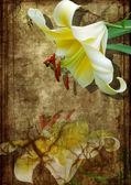 Bílá lilie na starý papír