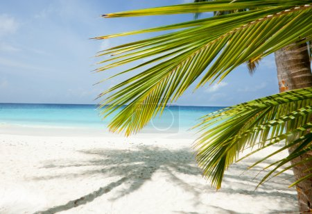 Maldives beach background