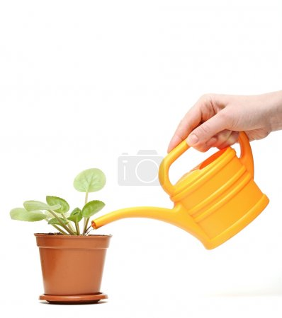 Photo for Closeup hand watering a plant with yellow watering can - Royalty Free Image
