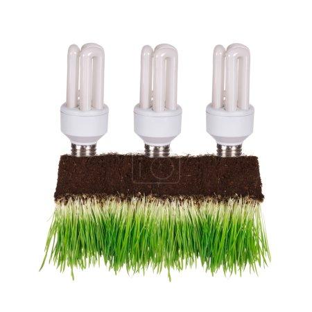 Light bulb in green concept