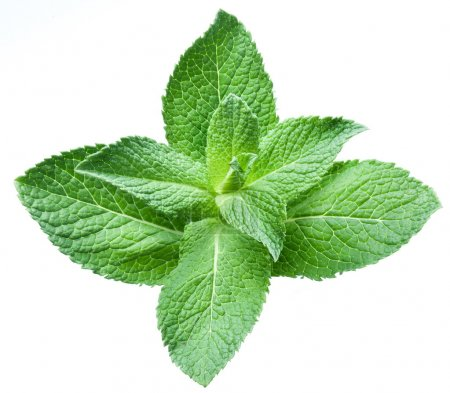 Leaves of mint