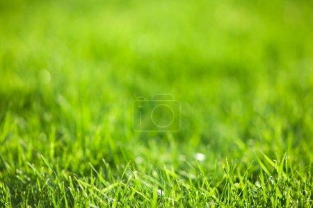 vert herbe succulente
